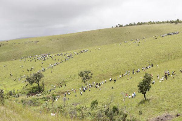 könyvelés Madagascar launches massive planting drive, eyes 60 million trees