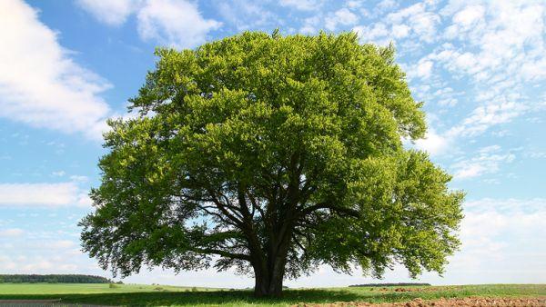 könyvelés Ma van a madarak és fák napja, az ország legrégebbi zöld ünnepe