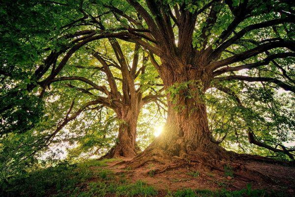 könyvelés What is Arbor Day?